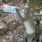 thirsty ape